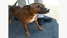 A003939 Suki Urgent Kill List For Space Clayton Co Ac By Partners For Pets Inc Dog Adoption Dog Pounds Pets