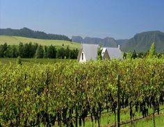 The Hunter Valley is a wine growing region north of Sydney.