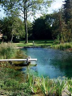 natural swimming pool, landscape design, swimming pool with dock, aquatic plants, swimming hole, pond, backyard water feature