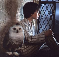Harry Potter's Hedwi