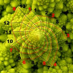Fibonacci lived in Pisa, where he was tutored by an Algeria in the Arabic art of mathematics-at the time, the most advanced system of mathematics in the world. In addition to writing a number of books on mathematics and geometry, Fibonacci is credited with having encouraged the use of Arabic numerals throughout Europe.      Read more: http://scienceray.com/mathematics/leonardo-fibonacci-a-natural-growth-of-mathematics/#ixzz1qxJ8rzqC