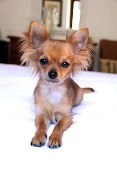 She is Olivia and with her owner Valentina has became a Chic4Dog's friend <3