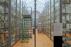Billedresultat for museum: open storage