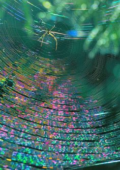 """""""The reflection of sun light on a spider web gives off unpredictable colors. The reflection of colors comes from the well knitted web by the tiny spider. Fotografia Macro, All Nature, Amazing Nature, Spider Art, Spider Webs, Mundo Animal, Beautiful World, Fractals, Mother Nature"""