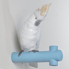 desiary.de - Parrot Hang 1