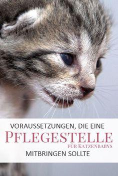 Pflegestelle für Katzenbabys werden - kann ich das auch? - Welche Voraussetzungen muss eine Pflegestelle für Katzen erfüllen?
