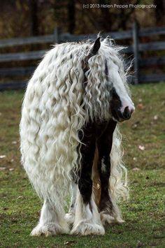 Belle chevelure <3 <3 <3 '''