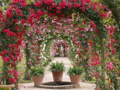 Laubengang mit Rosenbögen