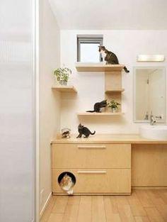 Cool Cat Beds, Himalayan Cat, Cat Shelves, Animal Room, Cat Condo, Cat Room, Pet Furniture, Cat Decor, Cat Walk