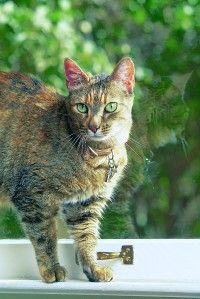 Don't Delay — Neuter or Spay     cat     Prevention Is the Solution
