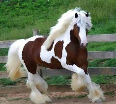 Beautiful Clydesdale. I want this one as well.