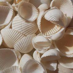 Soap Dish | Stoneware