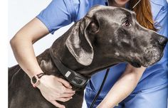 Everyday more information on pet health becomes available, and pet lovers are starting to take a big interest. Wearable health trackers have been becoming increasingly popular with humans, and now the trend seems to be growing with dogs as well.