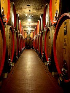 Valpolicella Wine Barrels, Wine Cellar, Wine Vine, Just Wine, California Wine, Weekends Away, Wine Cheese, In Vino Veritas, Italian Wine