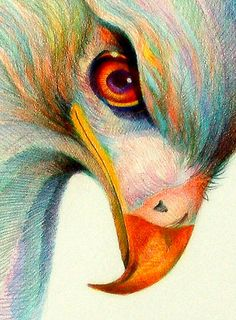 Eagle eye... such a piercing look on this color pencil drawing
