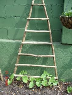 Another idea for growing beans or any vine