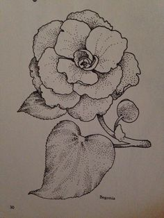 Begonia- when used in feng shui this means harmony in communication. Drawn by endlesshopestudio