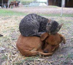 Wenn der Boden zu kalt ist, ist es gut einen Hund zu haben...