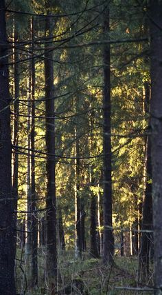 Winter forest. Photo: Åse Margrethe Hansen, 2014