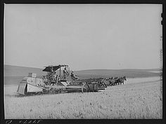 Title: Wheat combine drawn by twenty mule team. Walla Walla, Washington. Five men, including the mule skinner, worked on the combine. The wheat was sacked  Creator(s): Lee, Russell, 1903-1986, photographer