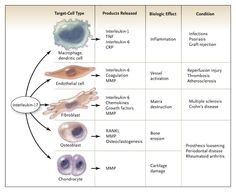Effects of Interleukin-17 on Cell Functions and Its Role in the Pathophysiology of Diseases.
