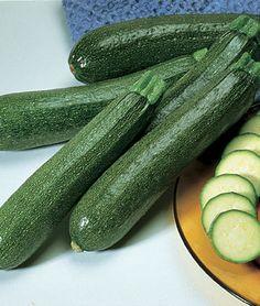 Squash, Summer, Burpee Hybrid Zucchini