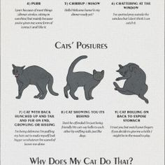 Cat Behaviours Explained | Visual.ly