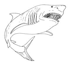 Realistic Shark Coloring Pages from Animal Coloring Pages category. Printable coloring pictures for kids that you can print and color. Have a look at our selection and print the coloring pictures free of charge. Penguin Coloring Pages, Fall Coloring Pages, Coloring Pages For Boys, Coloring Pages To Print, Printable Coloring Pages, Coloring Books, Captain America Coloring Pages, Shark Pictures, Butterfly Coloring Page