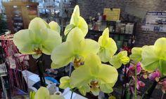 46 fantastiche immagini su orchidee una medicina per lanima medicine