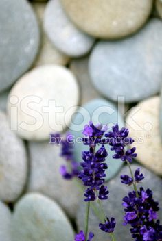 Lavender & River Pebble Background royalty-free stock photo
