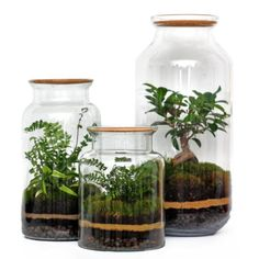 Bonsais  and ferns terrarium from Berlin.    #bonsai #terrarium #bonsaitree #fern #jar #terrariumlove #plantinjar #plantinglass