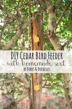 DIY cedar bird feede