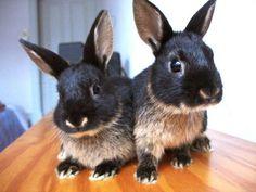 Tan Rabbit | Tan Rabbit Question - Coffee, New videos page 3 - BinkyBunny.com ...