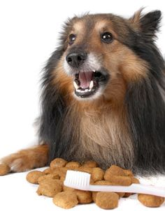 Health - Dog Dental Care: How to Clean Dogs' Teeth
