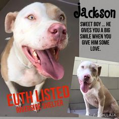 09/09/15-CODE RED - EUTH LISTED - FINAL CALL!!   Pit a Boo 1 hr · Edited ·     EUTH LISTED! URGENT! MEDICAL ~NEEDS OUT ASAP. Has kennel cough! ( already neutered.) JACKSON #A1148169 (MUST EXIT ON 8/24)  LINK TO VIDEO: http://www.youtube.com/watch?v=_zX_qvyhhuI  I am a neutered male, fawn and white Pit Bull Terrier. The shelter staff think I am about 2 years and 10 months old. I have been at the shelter since Aug 12, 2015. If I am not claimed, after my stray holding period, I may be available…