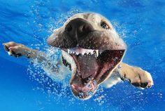 Série captura expressões impagáveis de cães debaixo d'água