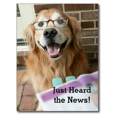 Golden Retriever Just Heard the News Congrats Post Cards by #AugieDoggyStore. Sold to a customer in Palm Coast, FL