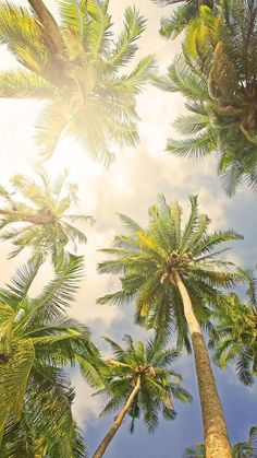 Palms From Paradise.