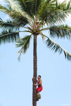 The Polynesian Cultural Center in #Laie. #polynesian #theme #park #oahu #hawaii