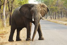 Someone Is Using #Cyanide To Kill #Elephants In #Zimbabwe's National Parks - The carcases of at least 40 poisoned elephants have been discovered in Zimbabwe's national parks since last week, renewing concerns about poaching on protected lands. On Tuesday, rangers at #Hwange National Park found 26 elephants who died of cyanide poisoning, The Associated Press reported. The troubling discovery comes after the bodies of 14 others, also apparently dosed with cyanide…