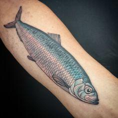 A herring.