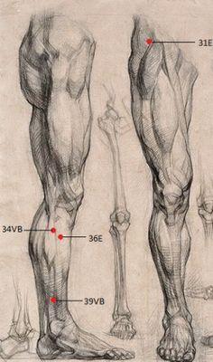 Human Muscle Anatomy, Human Anatomy Drawing, Human Figure Drawing, Drawing Legs, Body Drawing, Life Drawing, Body Reference Drawing, Anatomy Reference, Drawing Skills
