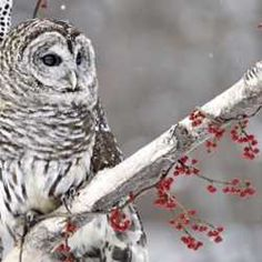 5 Tips for Taking Pictures of Birds in the Winter