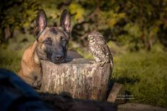 The Unlikely Friendship Of A Dog And An Owl | Awesome Photography