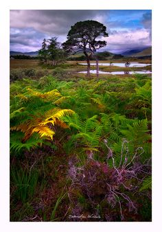 This beautiful Lake Loch Tulla is located only few steps away from one of the…