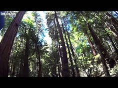San Francisco is rich in spectacles - take a virtual tour right now! (picture: 0204 Muir Woods00 Main Trail)
