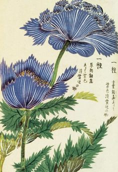 Honzo Zufu [Blue Flower] by Kan'en Iwasaki - Wood block print and manuscript on paper, Japan