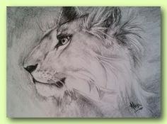 Lioness - Contè sketch 29 x 42cm