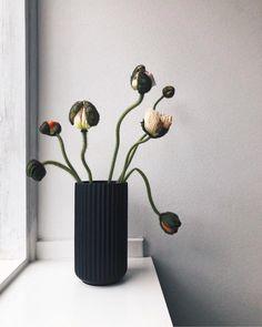 "Mille Emilie /// SONOMA SEVEN on Instagram: ""// the season of spring ♡"" Modern Bathrooms Interior, Bathroom Interior Design, Object Photography, Black Vase, Scandinavian Bedroom, Minimalist Home Decor, Healthy Women, Green Life, Pottery Ideas"