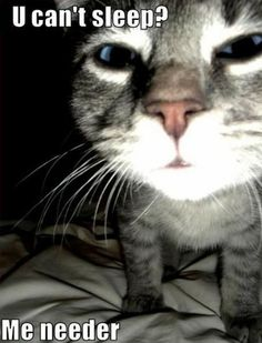 Funny feline Thursday – When the cats rule the roost - PMSLweb Funny Animal Pictures, Funny Animals, Cute Animals, Funny Horses, Animal Quotes, Animal Memes, Animal Humor, Crazy Cat Lady, Crazy Cats